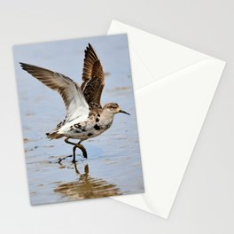 Pectoral sandpier Stationery Cards