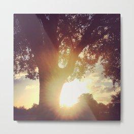 Sunset at the park Metal Print