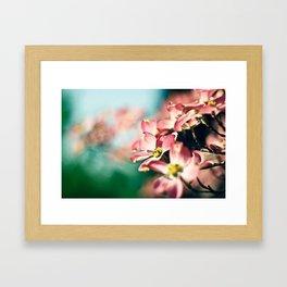 Pink Dogwood Framed Art Print