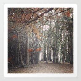 Light through the Cypress Art Print