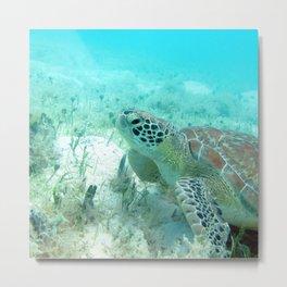Watercolor Turtle, Green Turtle 35, St John, USVI Metal Print