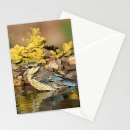 young bird bathes Stationery Cards