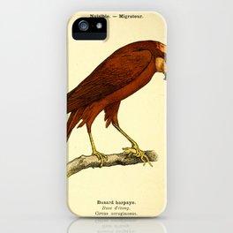 Eurasian Marsh Harrier iPhone Case