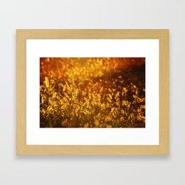 Foxtail Framed Art Print