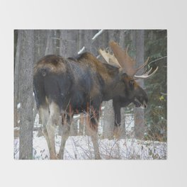 Massive male moose on the loose in Jasper National Park Throw Blanket
