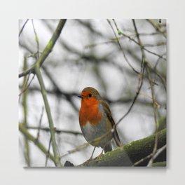 Little English Robin Metal Print