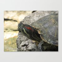 tortoise Canvas Prints featuring Tortoise by Liya Perfidious