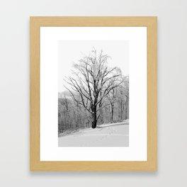 Maple Tree in Winter Framed Art Print