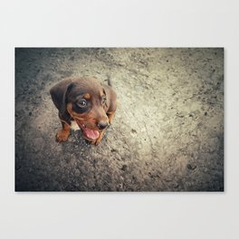 funny puppy Canvas Print