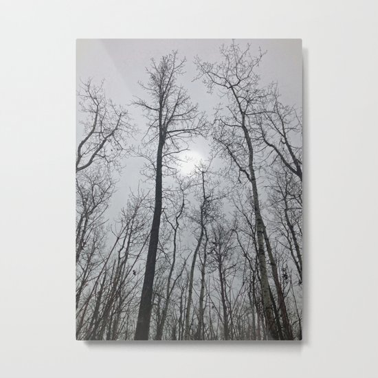 Bare Trees  series (2) Metal Print