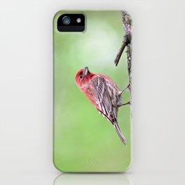Fancy Finch iPhone Case