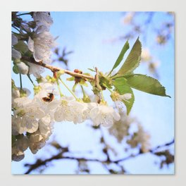 Cherry Blossom & Bee Canvas Print