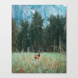 Baby Deer in Yosemite Canvas Print