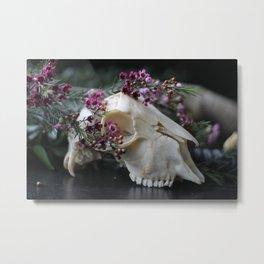 Sheep Skull I Metal Print