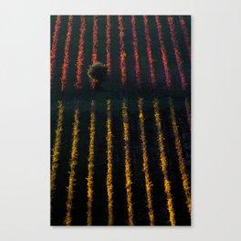 Autumn vineyard at sunset Canvas Print