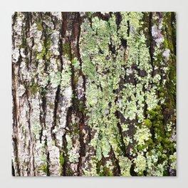 Tree Bark Lichen Canvas Print