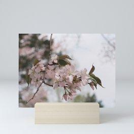 Sakura in bloom II Mini Art Print