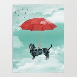 Dachshund chute Poster