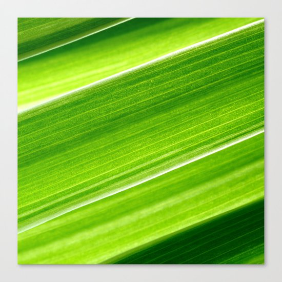 green grass IV Canvas Print