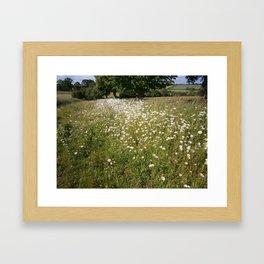 Path of Daisies Framed Art Print