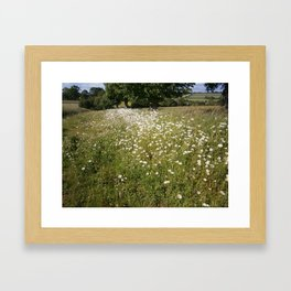 Path of Daisies Framed Art Print
