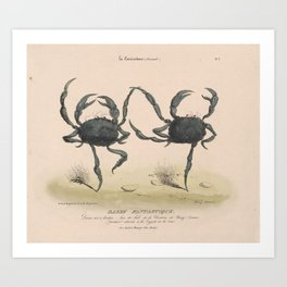 Vintage Illustration of Dancing Crabs (1849) Art Print
