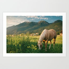 Pretty Horse Eating Grass in the Montana Sunset Art Print