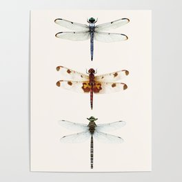 Dragonfly Collector Poster