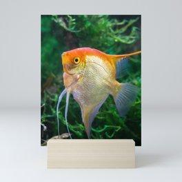 Pterophyllum Scalare yellow angel tropical fish underwater with plants Mini Art Print