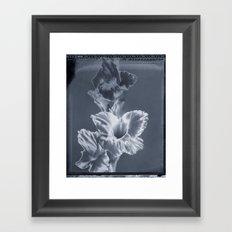 'Gladiola' Framed Art Print