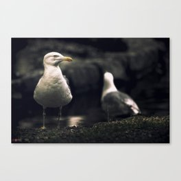 Seagull. The boss of the pond. Canvas Print
