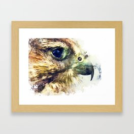 Kestrel Framed Art Print