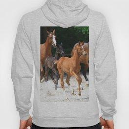 horses Hoody