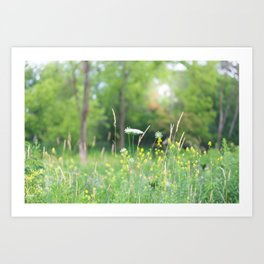 Wildflowers and the Woodland Art Print