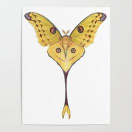 Comet moth (Argema mittrei) Poster