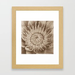 sepia water lily centre Framed Art Print