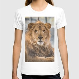 Lambert the Lion All Grown Up T-shirt