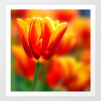 tulip Art Prints featuring Tulip by Tracie Brown