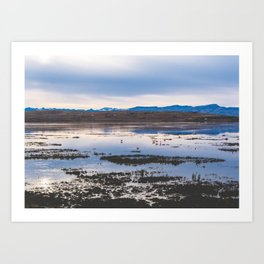 Flamingoes on El Calafate, Patagonia, Argentina 2 Art Print