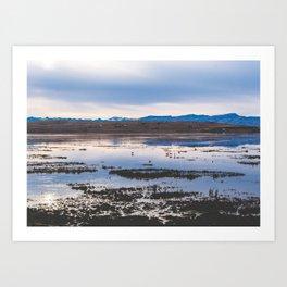 Flamingoes on El Calafate, Patagonia, Argentina 2 Art Print