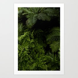 Tropical jungle. Art Print