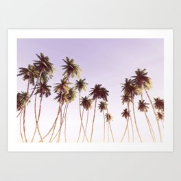 Palm Trees In Sunset Art Print