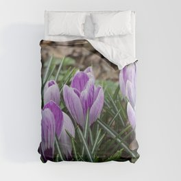First crocuses of the year Comforters