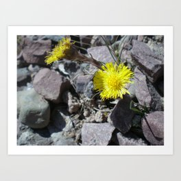 Coltsfoot Art Print