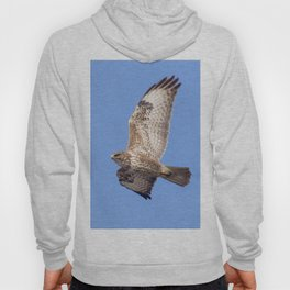 Common Buzzard (Buteo buteo) in flight Hoody