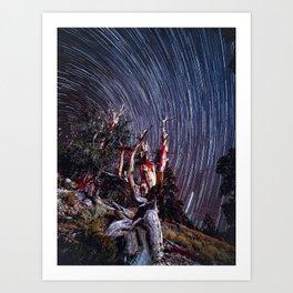 Ancient Bristle Cone Pine Forrest Star Trails Art Print