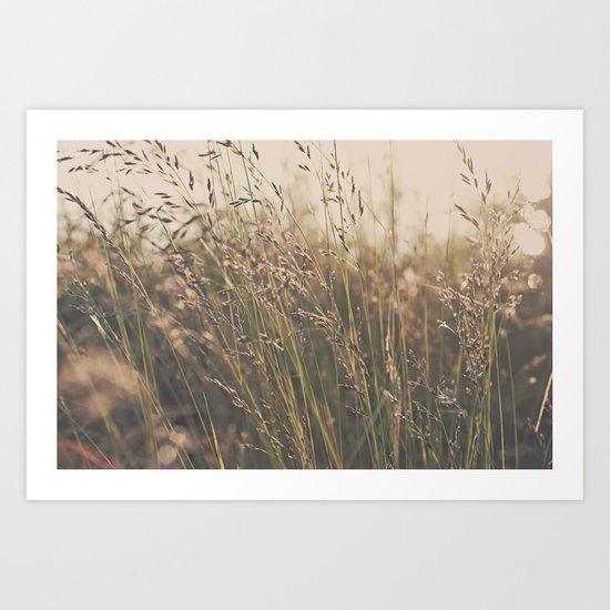 Field in the Sun Art Print