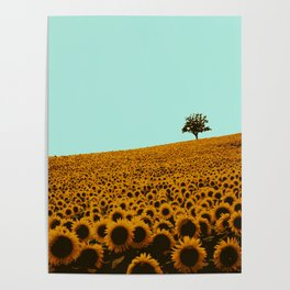 Sunflowers in green Poster