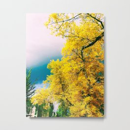 Photograph of Bright Yellow, Autumnal Leaves Against Cloudy Skies in Edmonton, AB During Fall Metal Print