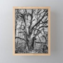 Oregon White Oak Tree at William L Finley Framed Mini Art Print